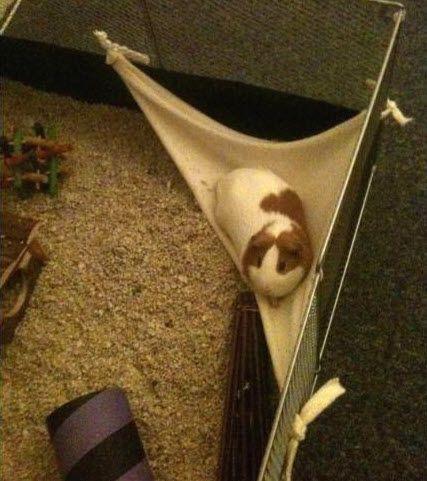 guinea pig hammock tutorial
