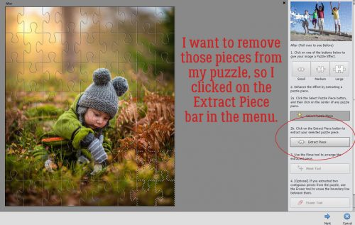 photoshop elements 15 organizer tutorial