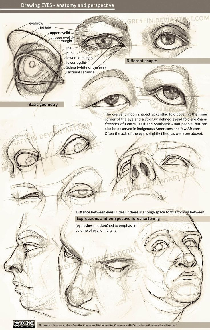 human anatomy drawing tutorial