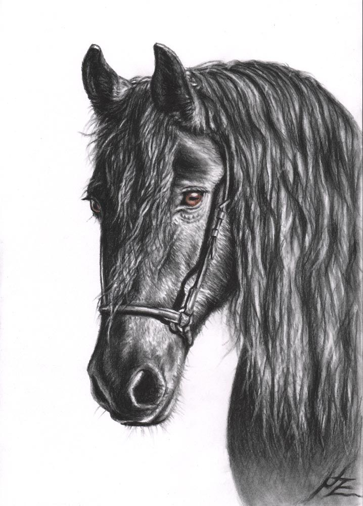 charcoal drawing tutorial pdf