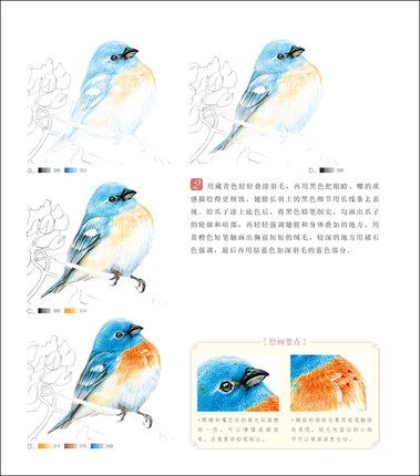 colored pencil bird tutorial