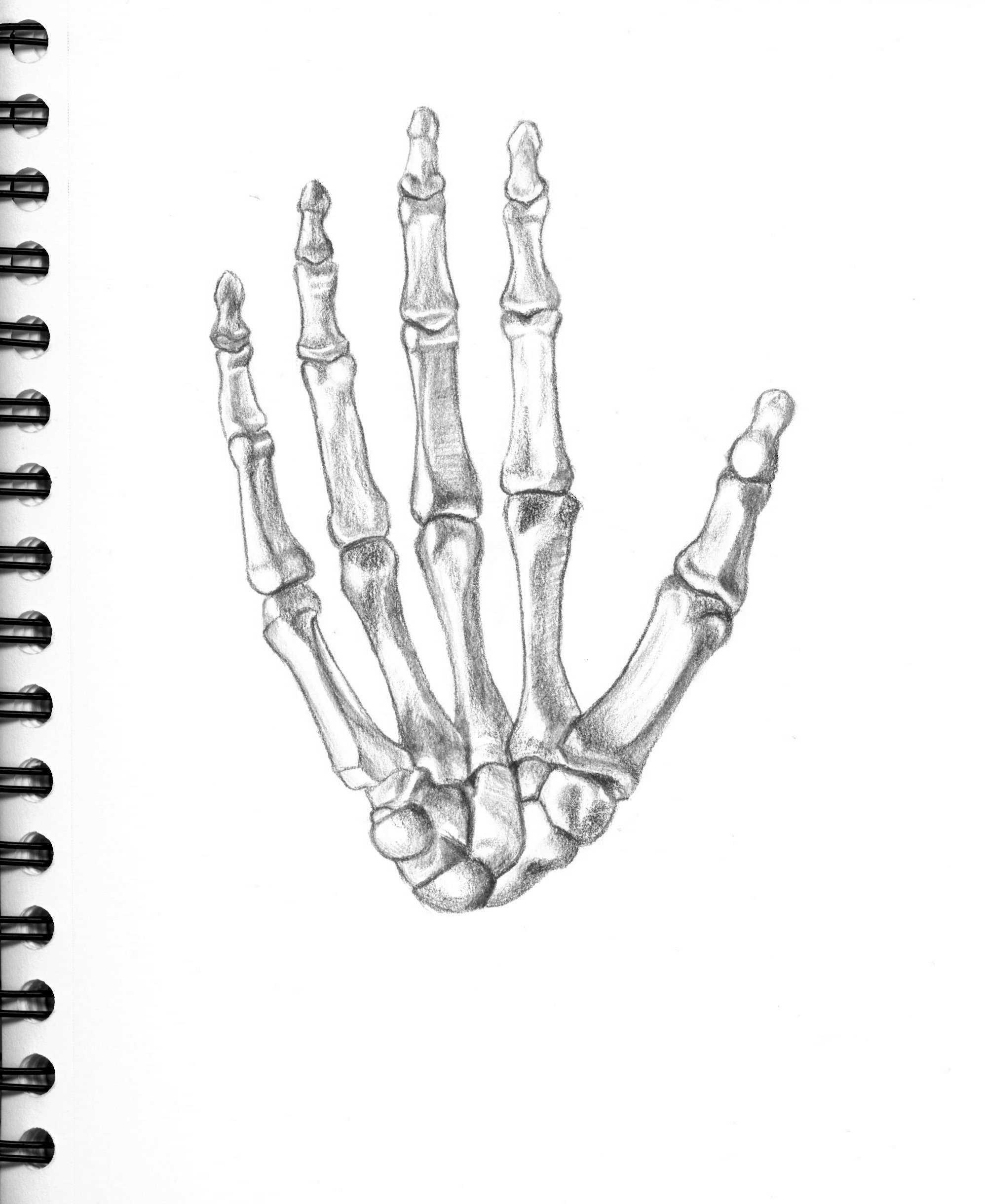 skeleton hand drawing tutorial