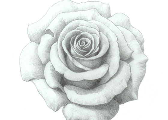 how to draw a rose easy tutorial