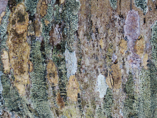 tree bark texture photoshop tutorial